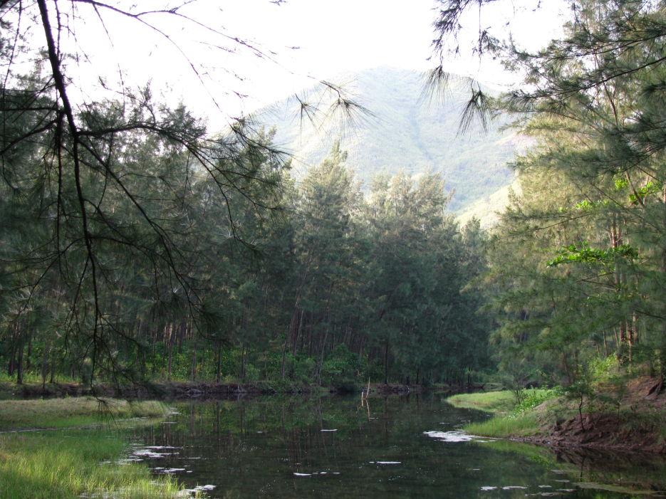 Anawangin swamp
