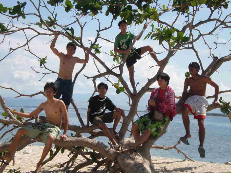 A tree in Camara Island