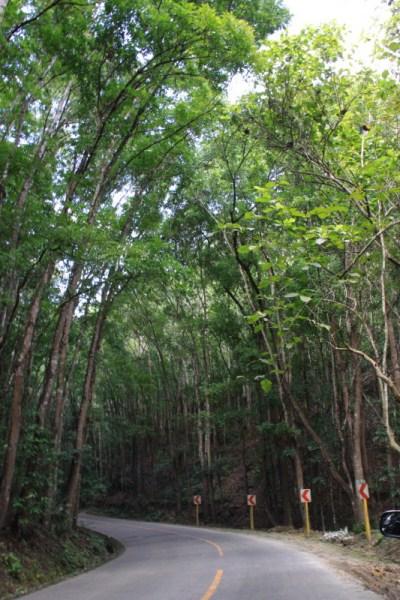 Bilar Mahogany Forest