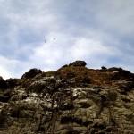 Birds at Manlanat Island