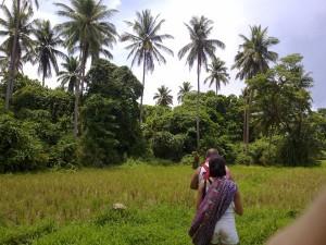 Coconut Area Jomalig