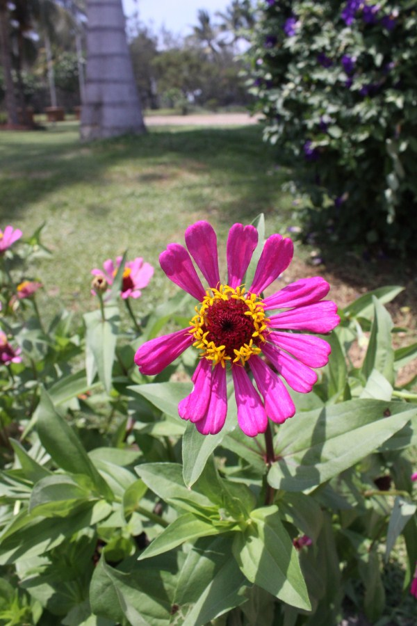 Flower outside Fort Ilocandia Resort Hotel