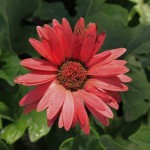Flower in Sun Island