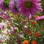 Flowers in Sun Island
