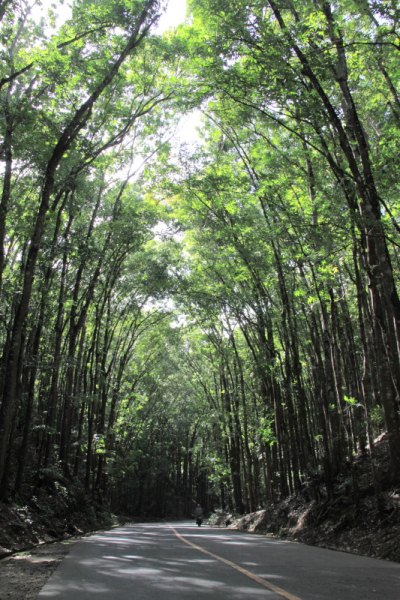 The Rajah Sikatuna forest along the national road in Bilar