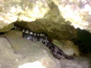 Snake at Manlanat Island