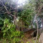 Trees In Kanaway Island