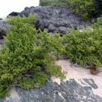 Trees Kanaway Island