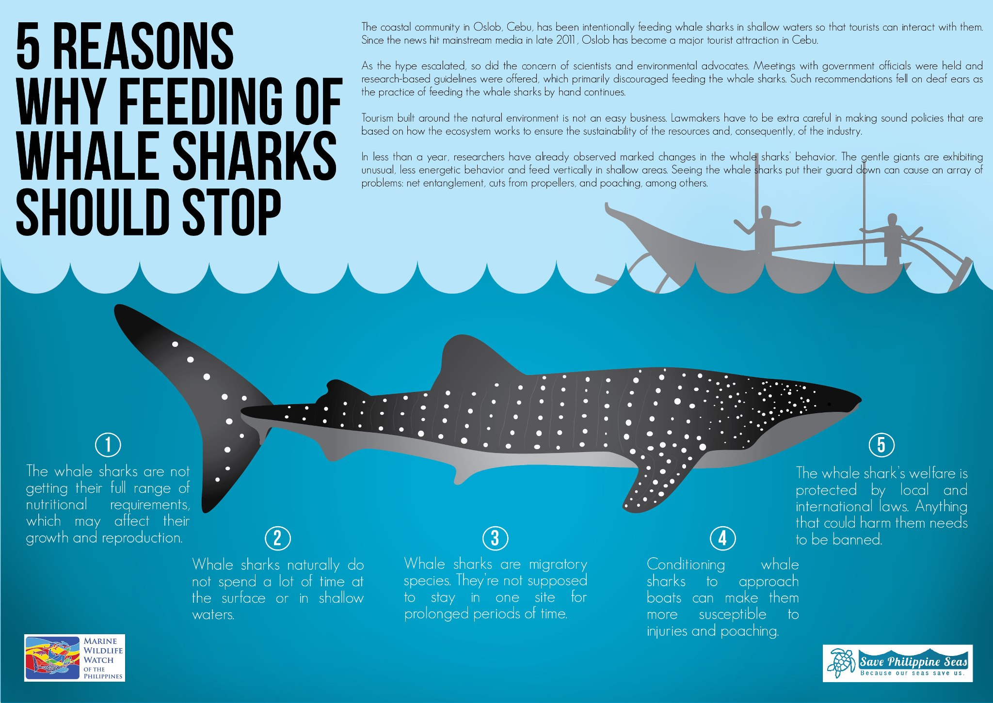 5 Reasons Why Feeding Whale Sharks Should Stop