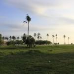Greenfield Potipot Island