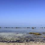 Potipot Island Rocky Beach