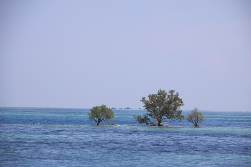 trees-burot-beach