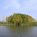 Binjiang Wetland
