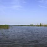 Binjiang-Wetland-3