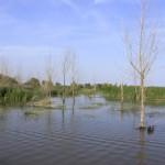 Binjiang-Wetland-4