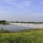 Binjiang-Wetland-Plastic-Bridge