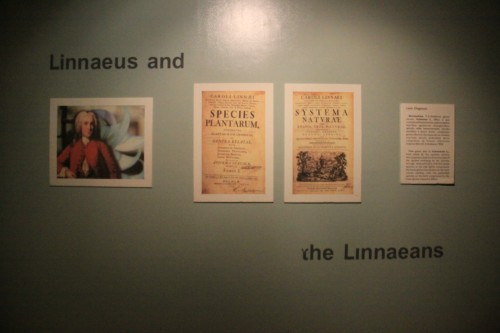 Linnaeus and the Linnaeans