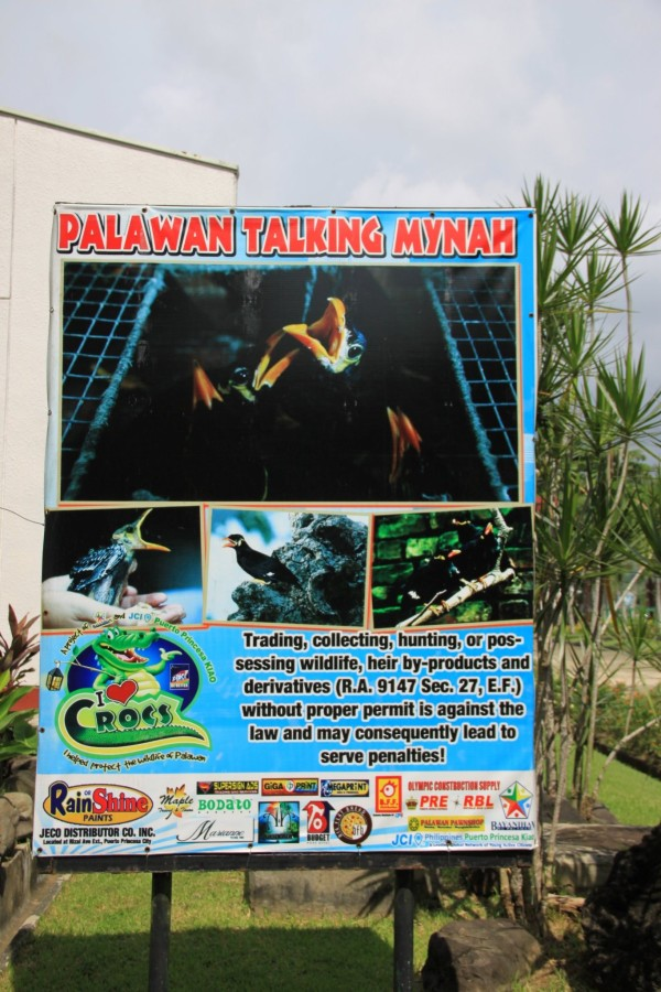 Palawan Talking Mynah Poster Palawan Wildlife Rescue And Conservation Center Intrepid Wanderer